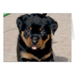 Rottweiler Puppy Running With Tongue Out Card