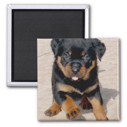 Rottweiler Puppy Running With Tongue Out Magnet