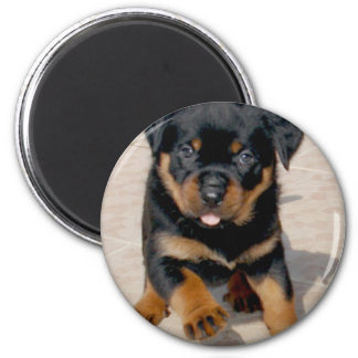 Rottweiler Puppy Running With Tongue Out 2 Inch Round Magnet