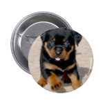 Rottweiler Puppy Running With Tongue Out Pin