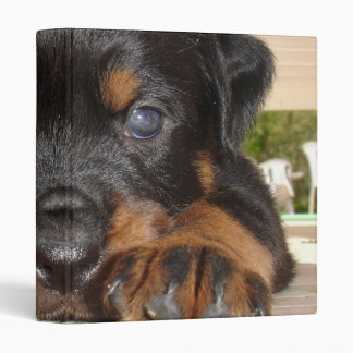 Rottweiler Puppy With Big Paws Lying Down Binder
