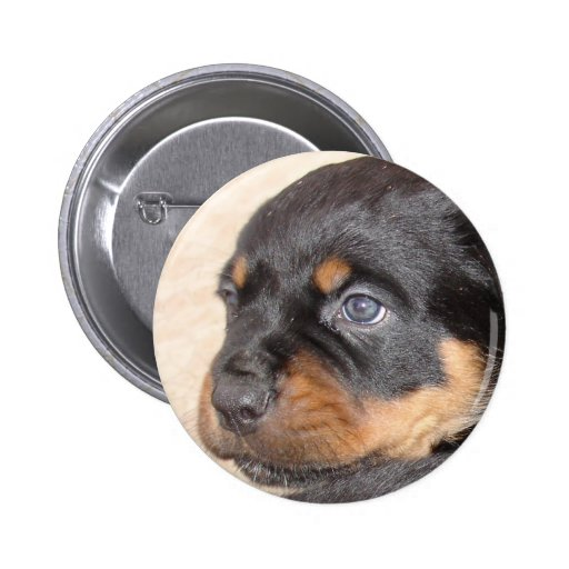 Rottweiler Puppy With Blue Eyes Buttons