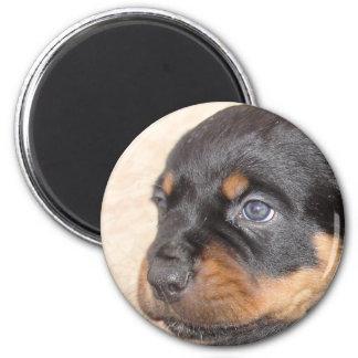 Rottweiler Puppy With Blue Eyes 2 Inch Round Magnet
