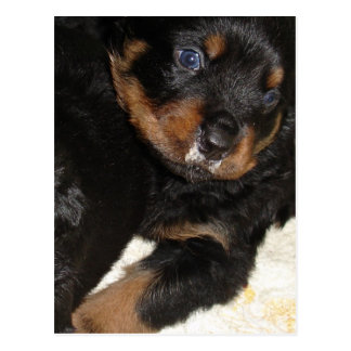 Rottweiler Puppy With Food on Face Postcard