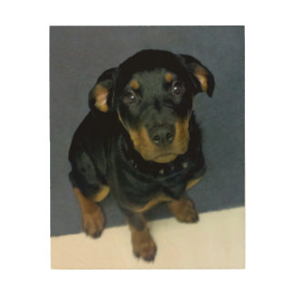 Rottweiler Puppy Wood Canvas