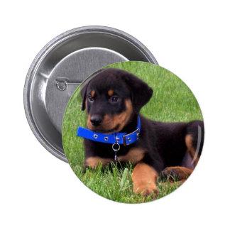 rottweiler pups. button