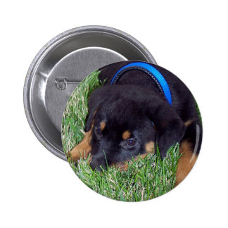 rottweiler pups. pinback button