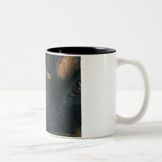 Rottweiler & Salamander mug