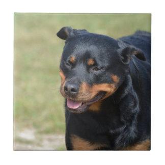 Rottweiler sencillo azulejo cuadrado pequeño