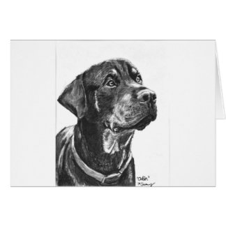 Rottweiler sketched in charcoal card