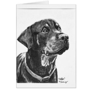 Rottweiler sketched in charcoal greeting cards
