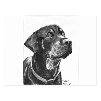 Rottweiler sketched in charcoal postcard