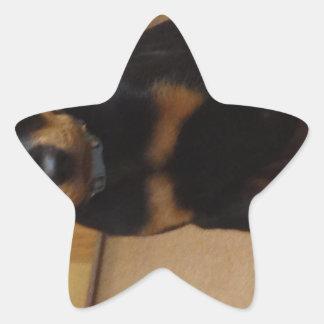 Rottweiler Star Sticker