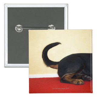 Rottweiler wagging tail, hind section 2 inch square button