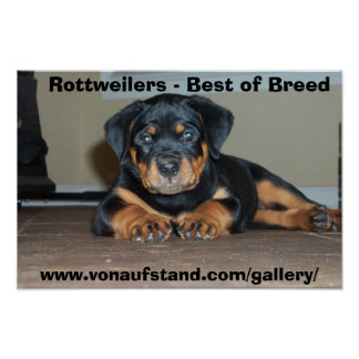 Rottweilers - Best of Breed Poster