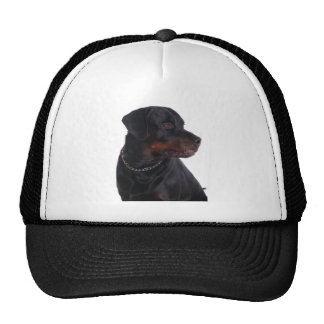 rottweilers mesh hats