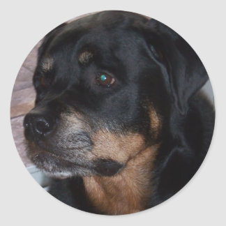 Rottwieler gifts classic round sticker