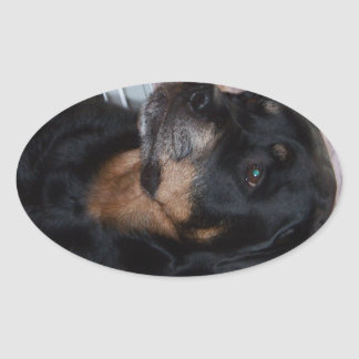 Rottwieler gifts oval sticker