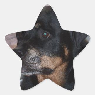 Rottwieler gifts star sticker