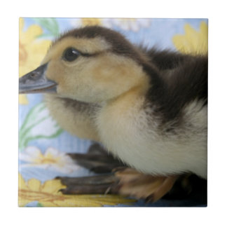 rouen duckling facing left low head small square tile