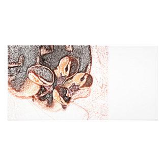 rouen ducklings sketch cute baby duck photo cards