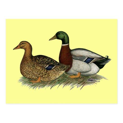 Rouen Ducks Postcards