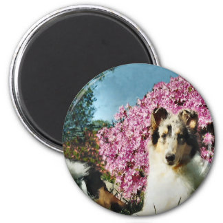 Rough Collie Art Gifts Magnet