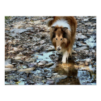 Rough Collie Art Gifts Poster