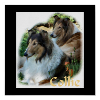 Rough Collie Art Gifts Posters