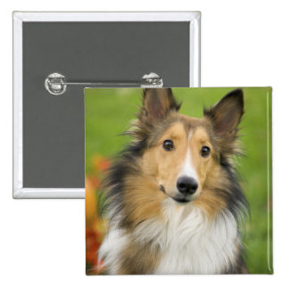 Rough Collie, dog, animal 2 Inch Square Button