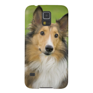 Rough Collie, dog, animal Galaxy S5 Cover