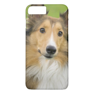 Rough Collie, dog, animal iPhone 8 Plus/7 Plus Case