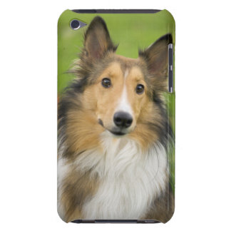 Rough Collie, dog, animal iPod Case-Mate Case