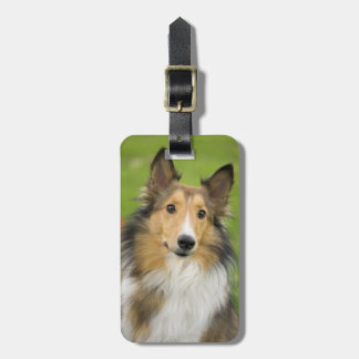 Rough Collie, dog, animal Luggage Tag