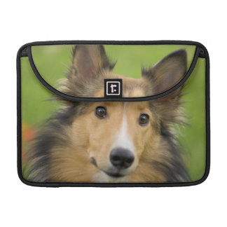 Rough Collie, dog, animal MacBook Pro Sleeve