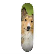 Rough Collie, dog, animal Skateboard Deck
