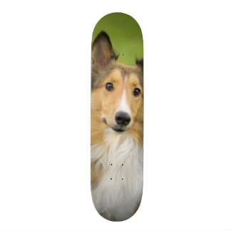 Rough Collie, dog, animal Skateboard Deck