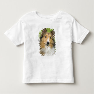 Rough Collie, dog, animal Tees
