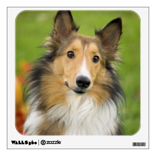 Rough Collie, dog, animal Wall Sticker