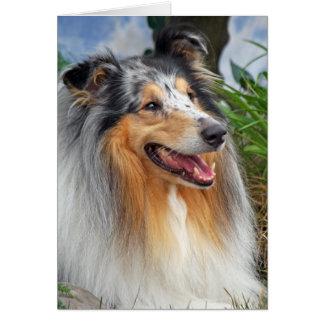 Rough collie dog beautiful blank greeting card
