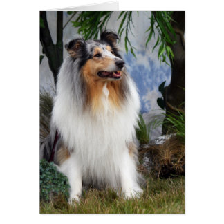 Rough collie dog beautiful photo blank note card