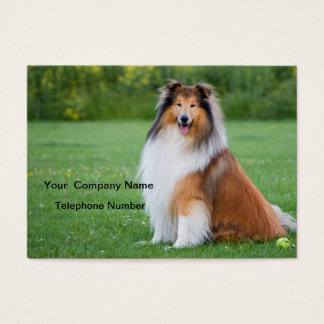 Rough collie dog beautiful photo business card