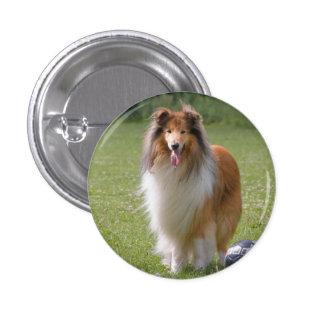 Rough collie dog beautiful photo button, pin