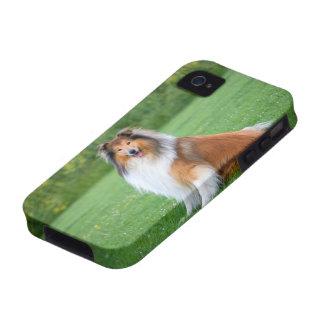 Rough Collie dog beautiful photo iphone 4 case