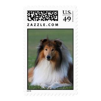 Rough Collie dog beautiful photo postage