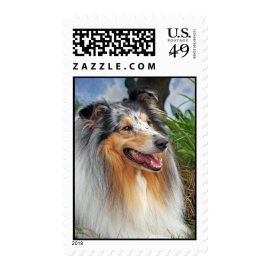 Rough Collie dog beautiful photo postage stamp