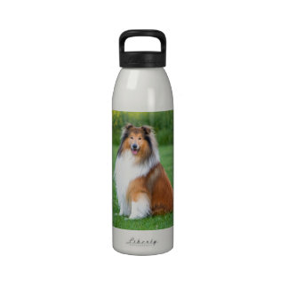 Rough Collie dog beautiful photo water bottle