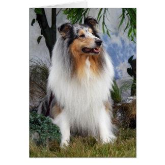 Rough Collie dog blue merle, blank greeting card