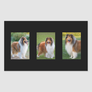 Rough Collie dog lovers photo rectangle stickers