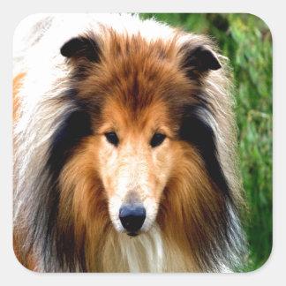 rough collie dog move to love square sticker